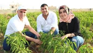 Çiftçilere hububat hastalıkları uyarısı