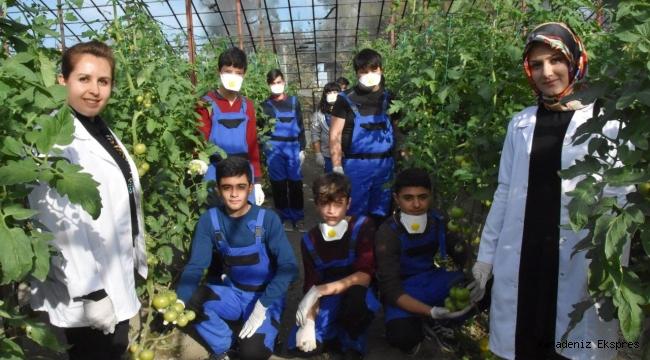 Okul bahçesinde kurulan serada yerli tohumla ürün yetiştirilecek