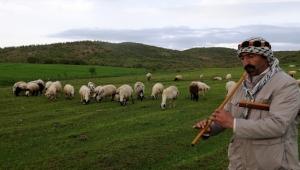 Çobanlar ilk iftarı sürülerinin yanında açtı