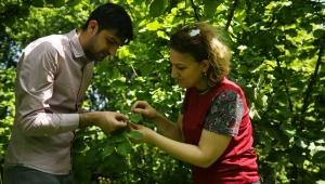 Fındık bahçelerini faydalı böcekler koruyacak