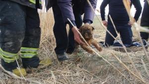 Kuyuya düşen yavru köpekleri itfaiye kurtardı