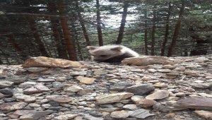 Yolunu kaybeden ayı yavrusu doğaya bırakıldı