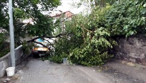 Tokat'ta kuvvetli rüzgar etkili oldu