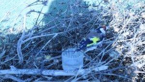Bartın'da saka kuşu avlayan kişiye 26 bin lira ceza