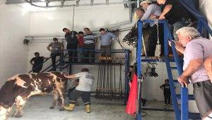 Ereğli'de kurbanlık hayvan satış yerleri denetlendi