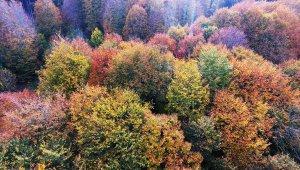 Nebiyan Dağı'nda doğa festivali düzenlenecek