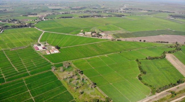 Bafra Ovası'nda damla sulama ile çeltik üretimi