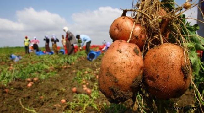Bu bir hayal değil: Organik tarım Türkiye'yi doyurur!