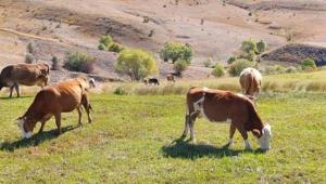'Hayvancılığın yeniden inşası için 11 maddelik deklarasyon ve 36 öneri'