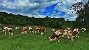 Tarım ve Hayvancılık Alanından Bitmeyen Suistimal, Köşe Dönme skandalı...
