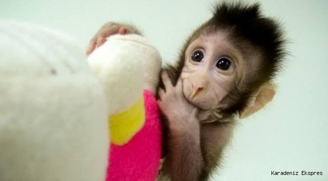Çin ve Japonya maymunlara akıl dna sı aşılamaya başladı