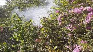 Ordu Ünye ilçesi Erenyurt - Saríhalıl Mahallesi ( eski belde) Seyirlik Ormanında yangın başladı