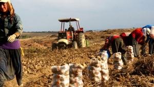 Türkiye'nin tarımsal ihracat sınavı