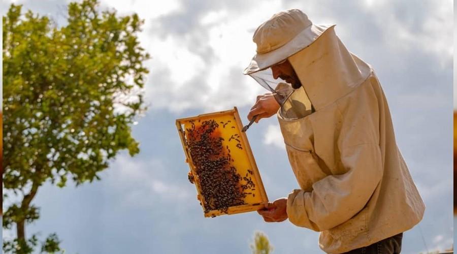 Arılarda, Zahmetli Oğul Toplama Dönemi