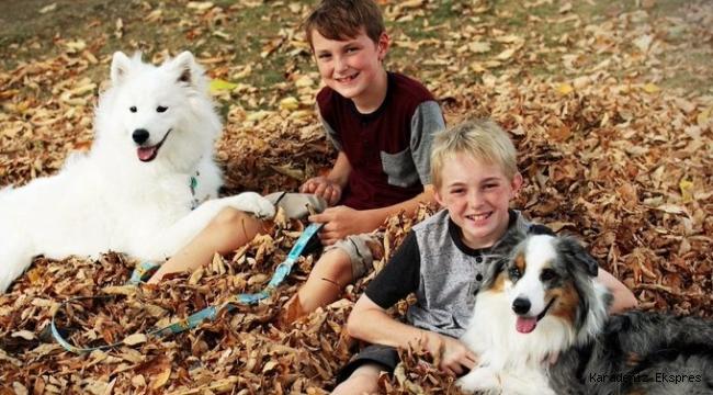 Çocuğunuz evcil hayvan mı sahiplenmek istiyor: Çocuğunuz için en uygun evcil hayvanlar