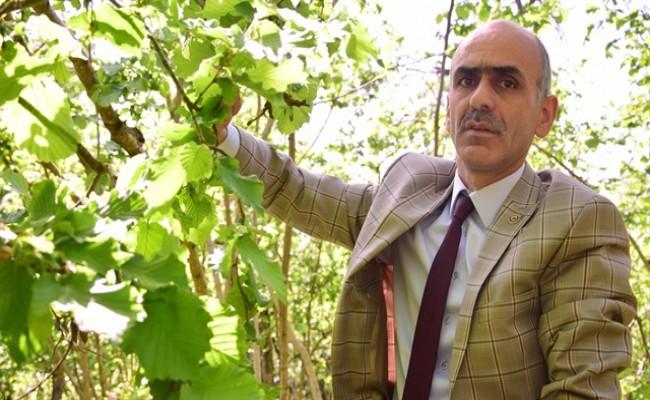 Giresun Ziraat Odası Başkanı Nurittin Karan: Biz Buradayız FİSKOBİRLİK'te Burada
