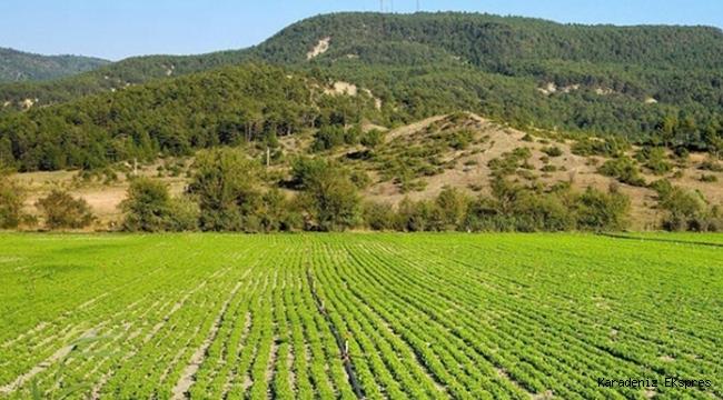 Hazine arazilerinin kiralanmasında son durum: 200 bin başvuru yapıldı