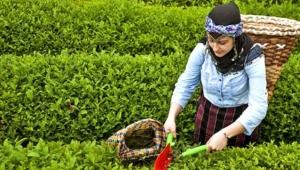 Rize MHP Teşkilatı Çay kanunu hakkında teklif hazırladı