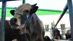 Uzmanından kurban eti uyarısı: Virüs etin üzerinde yaşayabilir