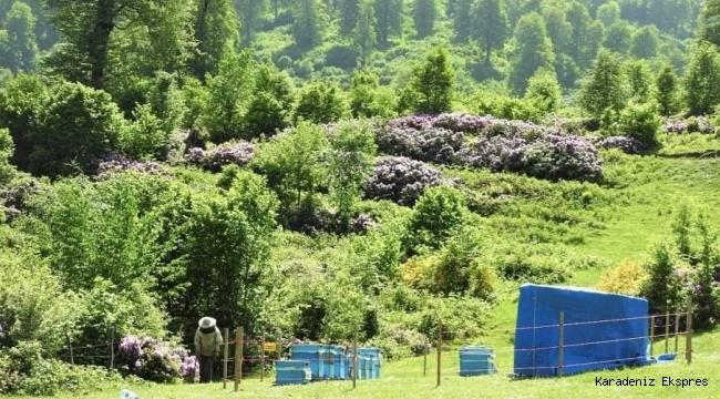 Arıcılar için 9 bal ormanı kuruldu
