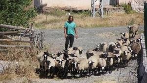 Kariyerini bırakıp köyüne döndü! Çobanlık yapıyor