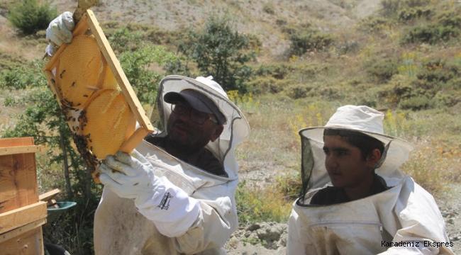 Bal Üreticiliği İşsiz Gençler İçin Çıkış Kapısı Olabilir