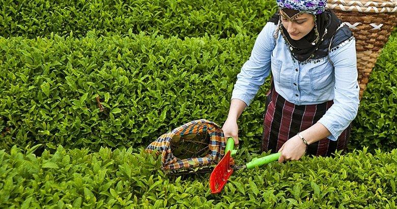 Çay üreticisine ithal çay darbesi