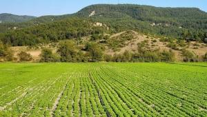 Hazine arazileri topraksız çiftçiye 10 yıllığına kiraya verilecek