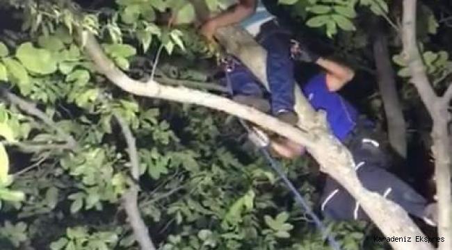 Niksar'da ceviz dökmek için çıktığı ağaçta mahsur kaldı