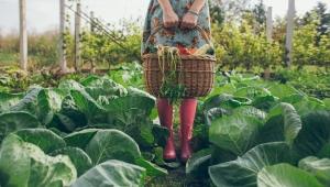 Organik tarımı hatırlamak