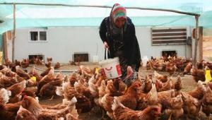 Türk yumurta üreticileri krizde
