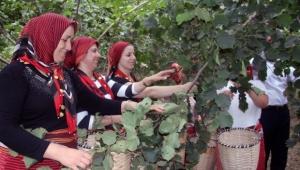 Başkan Güler,  fındık sektöründe en önemli soruna çözüm getirecek bir projeye imza atıyor