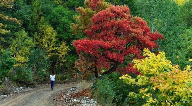 Tunceli'nin sonbaharda gözdesi : Salördek Köyü Ormanları
