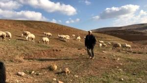 Bayburtlu çiftçiye 5 bin koyun dağıtıldı