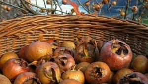 Karadeniz'de sonbaharın son meyvesi olarak bilinmektedir. Yöreden yöreye farklı isimleri vardır
