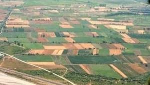 NİKSAR ve ERBAA'DA Hububatta kasım yağışları beklentisi