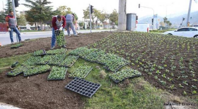 Tokat'ta, 130 bin mevsimlik çiçek toprakla buluşuyor