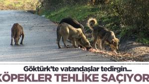 Göktürk'te başıboş köpekler tehlike saçıyor