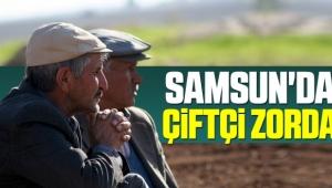 Samsun'da çiftçi zorda! Destek bekliyorlar