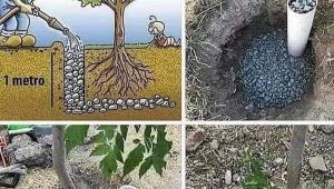 Avusturalyada neredeyse bütün peyzaj ve meyve ağaçlarının köklerinde bu şekilde PVC borular mevcuttur..