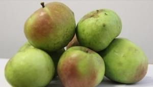 """""""Yomra elması""""na,coğrafi işaretbelgesi verildi"""