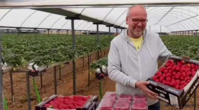 Antalya'da bir çiftçi topraksız çilek üretti