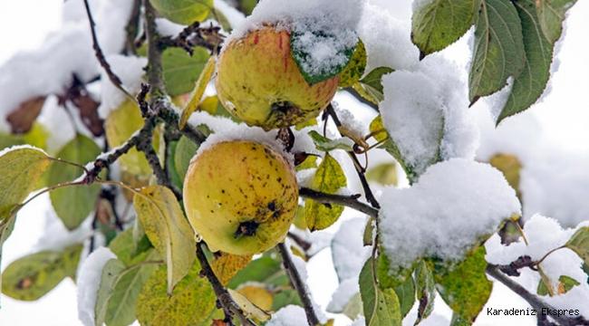 Bir gün güneş ertesi gün kar! Bu havalar tarımı nasıl etkiliyor?