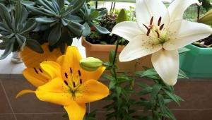 Bitkiler İçin 8 Pratik Doğal Gübre Yapımı