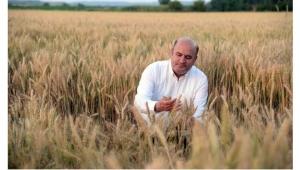 Buğday ekim alanları 15 yılda 24,5 milyon dekar azaldı
