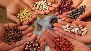Gıdanın temeli tohum...