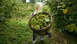 Çiftçilere gübre desteği artışı Resmi Gazete'de