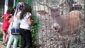 Hayvanat bahçesindeki geyiği kaçırıp öldürdükten sonra yiyen 2 kişi tutuklandı