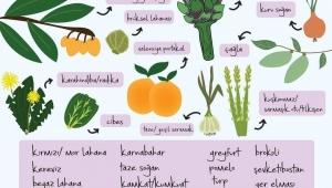 Mevsimsel beslen, sağlığını ve doğayı koru...