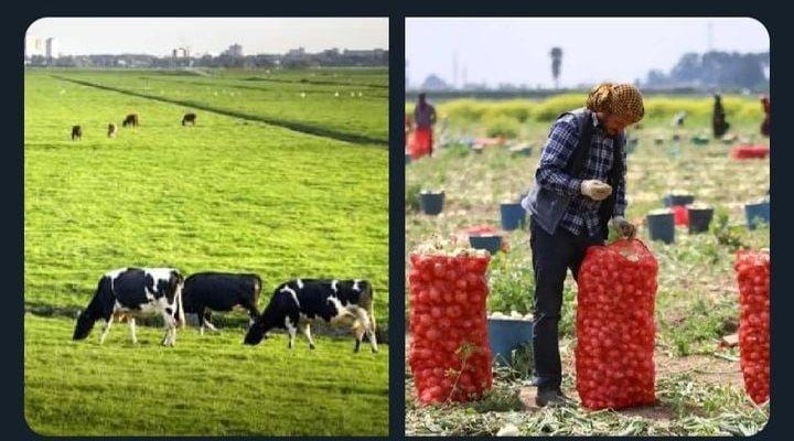 Başarılı bir tarımsal kalkınma için;...